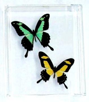 Custom Two Butterflies