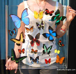 Tropical Rainforest Butterflies