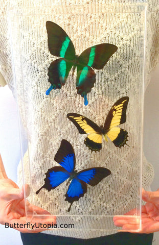 Custom Three Large Butterflies