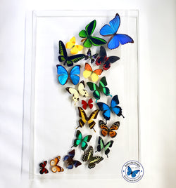butterflies dance art