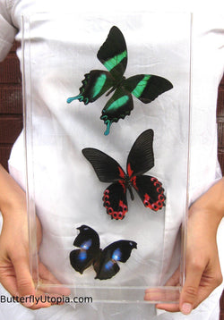 Green Blue Red Butterflies
