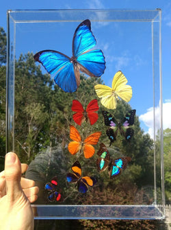 home butterfly decor