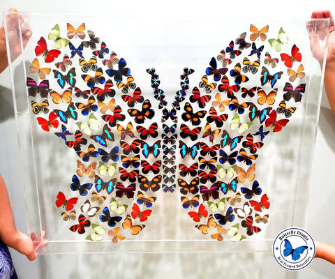 real butterfly shape art