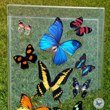 closeup picture real butterfly art