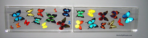 Four Foot Flight Minimalist Butterflies