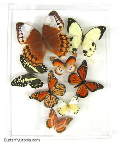 Eight Flight Rustic Butterflies