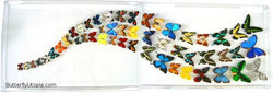 Rainbow Butterflies Wall