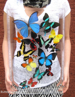 Buy Real Dried Butterflies For Sale