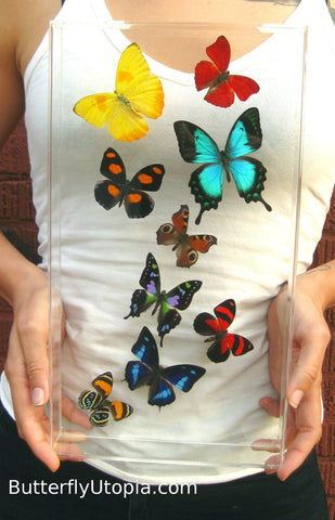 Harmony Mix Butterflies