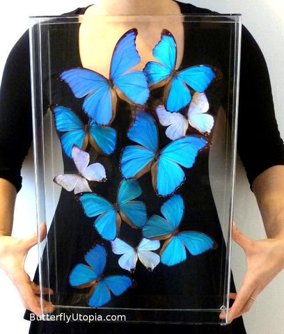 blue morpho art