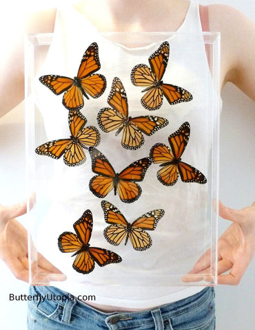 framed monarch flight butterflies