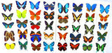 Butterfly Tattoos - 10 Sheets