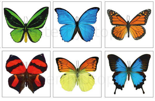 Large Butterfly Tattoos - 6 Sheets