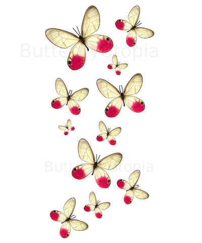 Pink Clearwing Butterfly Tattoos - 5 Sheets