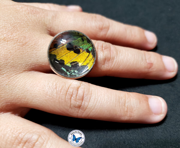 sunset moth jewelry - ring