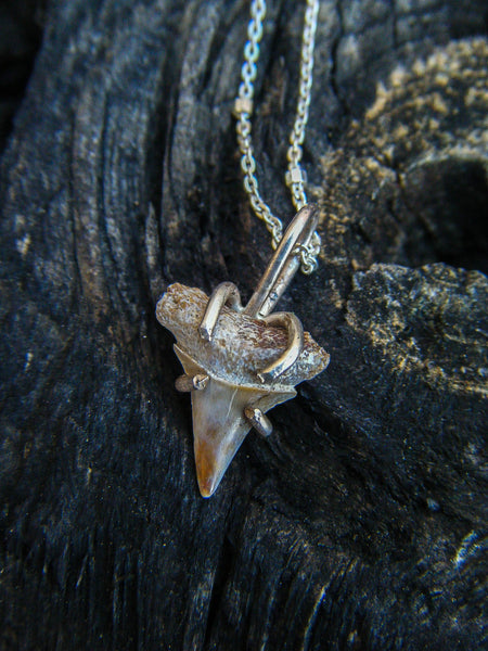 *NEW* Shark Tooth Talisman Necklace// 925 Sterling Silver