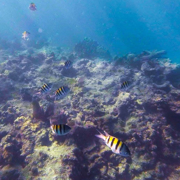 Key West Reef Snorkel - Afternoon