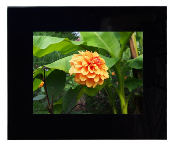 Framed Orange Dahlia Photograph