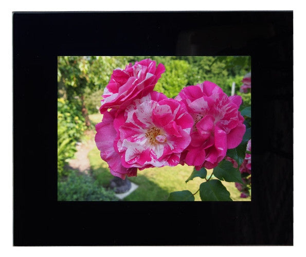 Framed Rose Photograph