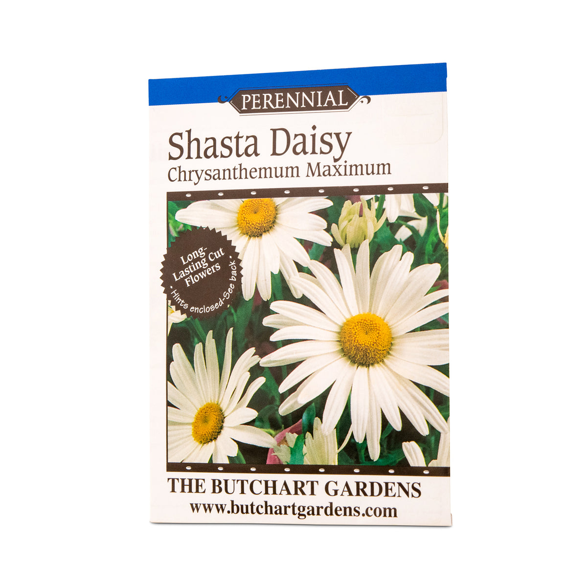 Seed shasta daisy the butchart gardens seed gift store perennial shastas are unrivaled for production of strong stemmed flowers during summer and early fall the daisy like flowers have snow white petals izmirmasajfo