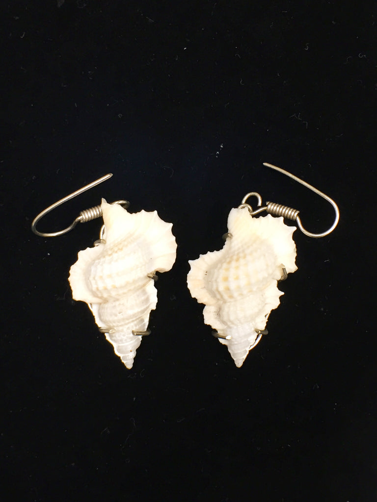 Seashell Earrings  SKU 137