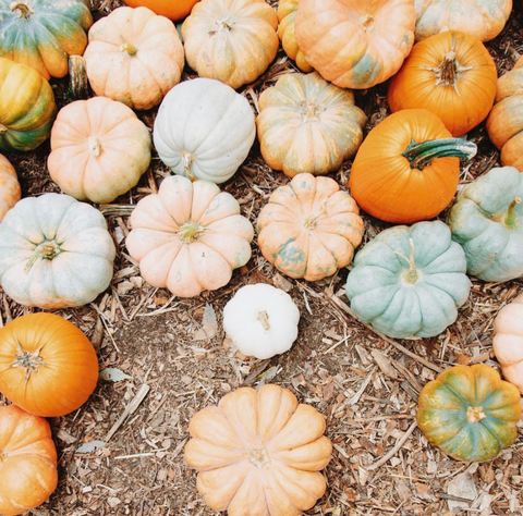 fall pumpkins by emily blincoe