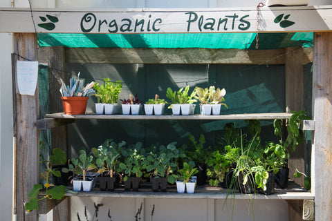 Organic plants, vegetables, herbs, flowers
