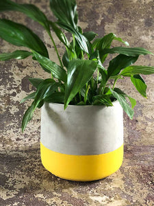 yellow cement planter
