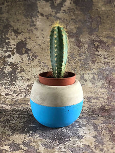 small blue cement planter
