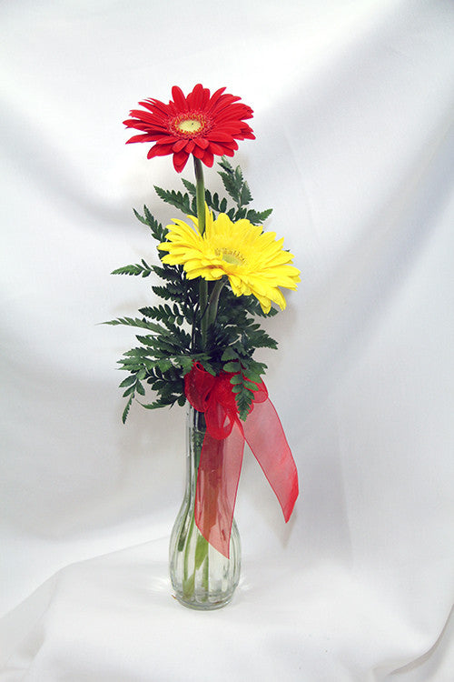 Gerbera Daisy Bud Vase Methodist Hospital Gift Shop