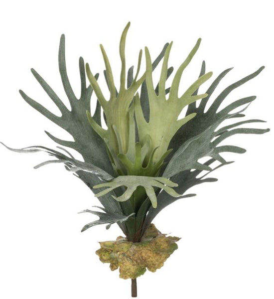 Staghorn Fern Stem - 19""
