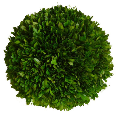 Preserved Boxwood Ball - 10""
