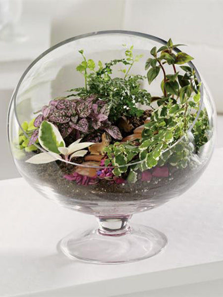 Footed Terrarium