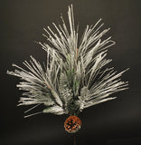 Snowy Long Needle Pine Spray