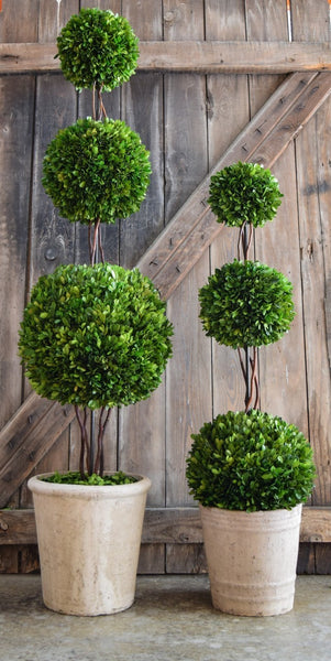PRESERVED BOXWOOD TOPIARY - TRIPLE BALL - 36""