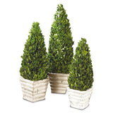 Boxwood Cone Topiary - 19