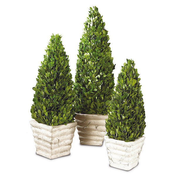 Boxwood Cone Topiary - 19""