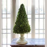 Boxwood Cone Tree on Stand