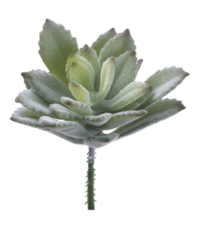 "3"" Baby Agave Pick-Green"