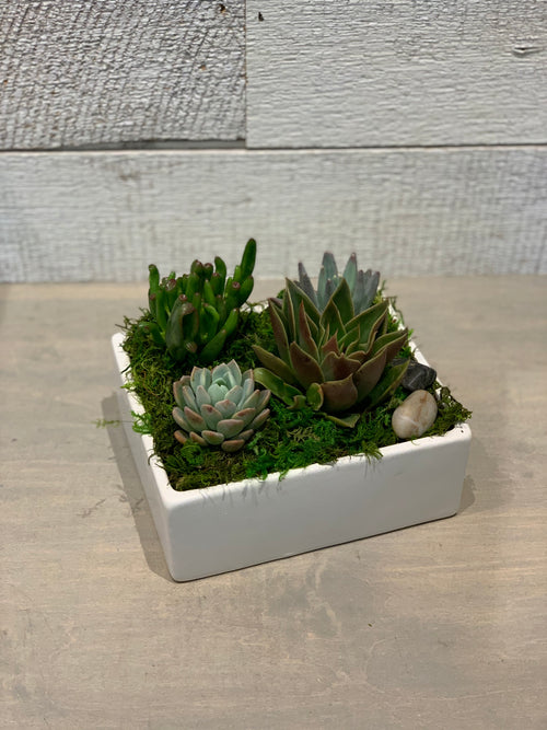 Tranquil Succulents