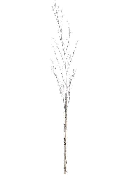 Birch with Ice Branch