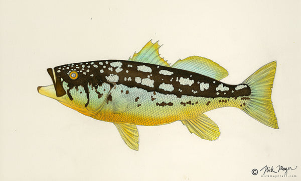 Calico Bass painting