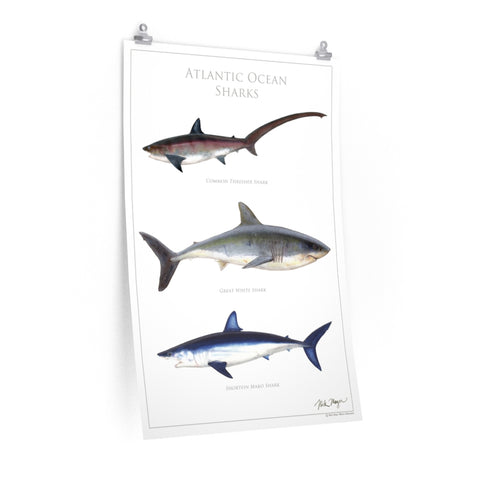 Atlantic Ocean Sharks Poster