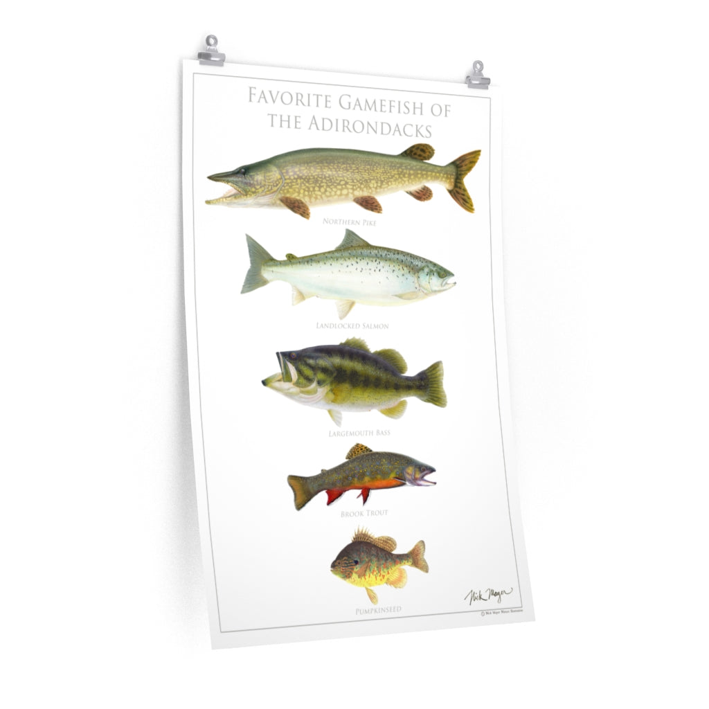 Favorite Gamefish of the Adirondacks Poster