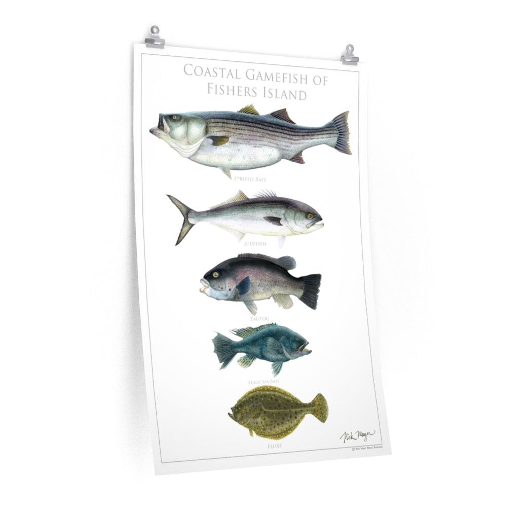 Coastal Gamefish of Fishers Island Poster