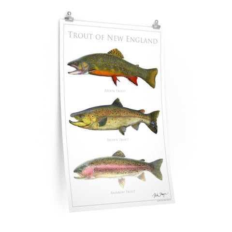 Trout of New England Poster