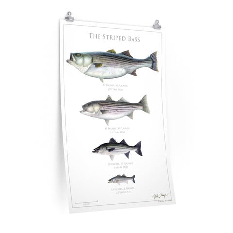 The Striped Bass Poster