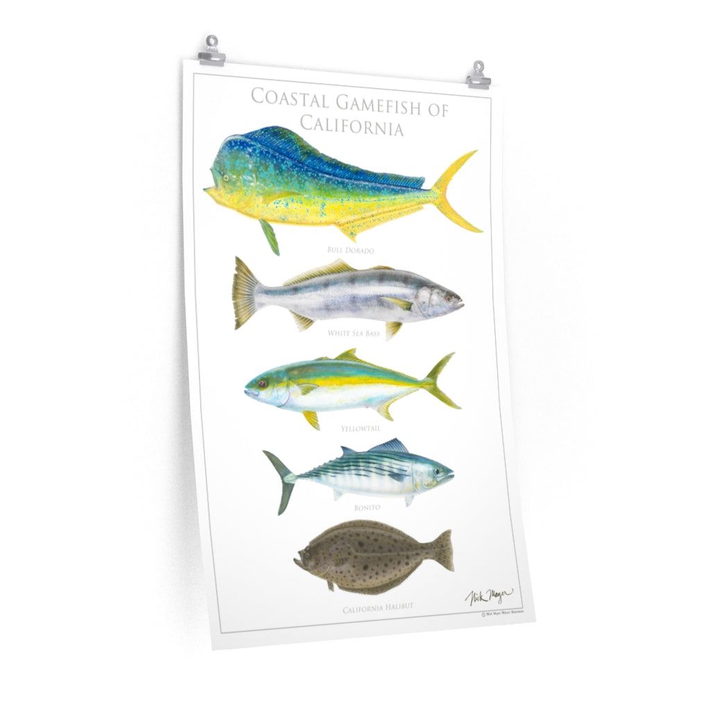 Coastal Gamefish of California Poster