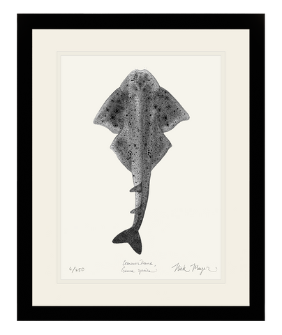 Angel Shark (b&w)