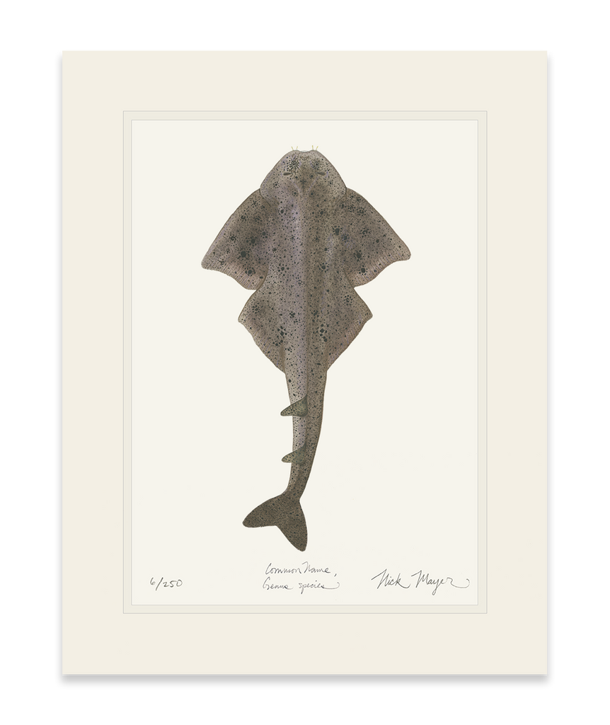 Angel Shark